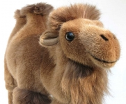 "Bactrian Camel ""Altei"""