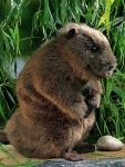 "Beaver ""Elli"", standing"