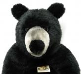 Black Bear, sitting