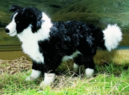 "Border Collie ""Mary"""
