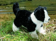 "Border Collie Puppy ""Eddy"""