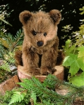 "Brown Bear ""Holly"", sitting"