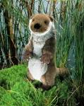 "Little Otter ""Otti"", standing"