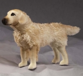 Golden Retriever, Miniature
