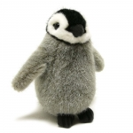 Emperor Penguin, chick