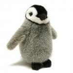 Emperor Penguin, chick
