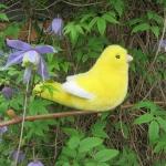 Kanarienvogel, gelb