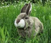 Kaninchen, hockend