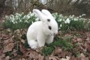 "Rabbit ""Flecki"""