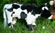 """Cow """"Rieke"""""""