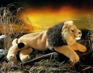 Lion, lying