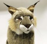 Lynx, studio animal