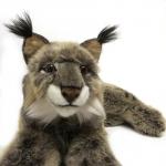 Lynx, lying