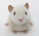 """Mouse """"Pieps"""""""