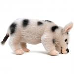 Micro-Pig, gefleckt