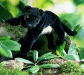 """Panther """"Nalini"""", liegend"""