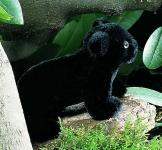 """Panther Baby """"Rangi"""""""