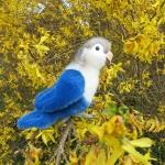 Pfirsichköpfchen, blau