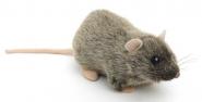 """Rat """"Rille"""""""