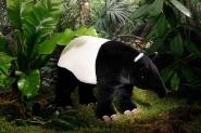 """Malayan Tapir """"Rani"""""""