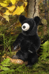 Black Bear, small