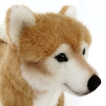 """Shiba-Inu """"Koro"""""""