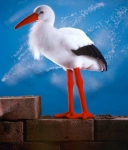 "Stork ""Adebar"""