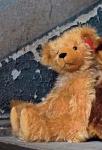 "Teddy ""Charlotte"""