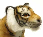 """Tiger """"Kadan"""""""