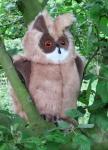 Eagle Owl, large
