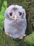 "Young Tawny Owl ""Juli"""
