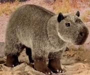 "Capybara Cub ""Rodrigo"""