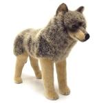 Wolf, standing