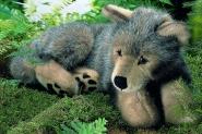 "Wolf Puppy ""Kolja"", lying"