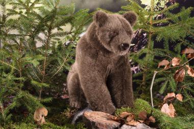 "Bear Sow ""Jurka"""