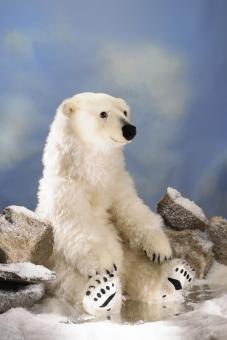 Polar Bear, large