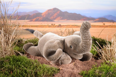 Elephant, small, lying