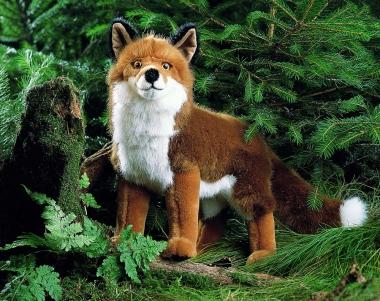 "Fox ""Felix"", standing"