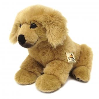 Golden Retriever Puppy, sitting