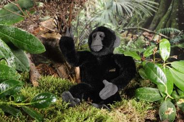 Gorilla, small