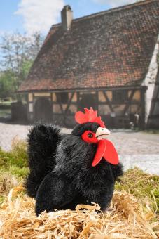 Rooster, black