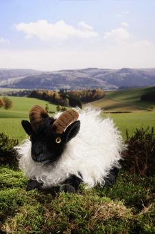 German Moorland Sheep, lying, mohair