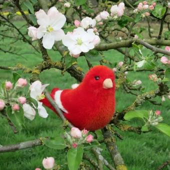 Kanarienvogel, rot