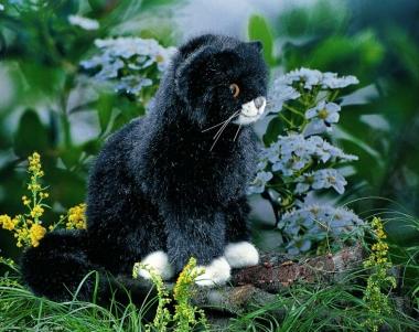 "Little Cat ""Mausi"", sitting"