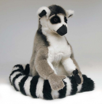 "Lemur - Katta ""Luis"""