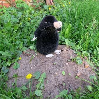 "Mole ""Erwin"", sitting"