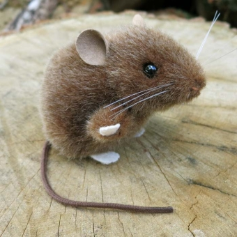 Mouse, brown