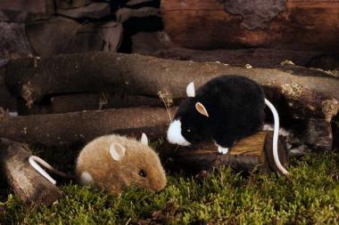 Maus, schwarz mit weiß
