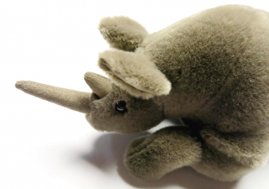 Rhinoceros, small, lying