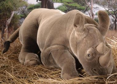 Rhinoceros, middle size, lying